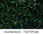 Green Leaves Background.green...