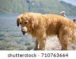 dog looking into sea