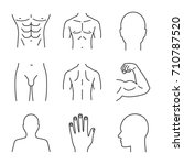 male body parts linear icons... | Shutterstock .eps vector #710787520