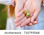 woman holding a pair of acorns... | Shutterstock . vector #710795068