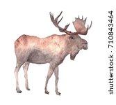 Watercolor Drawing Of Elk ...