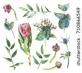set of protea  feverweed ... | Shutterstock . vector #710866549
