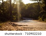 Small photo of Road to afternoon