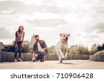 Stock photo romantic couple is on a walk in the city with their dog labrador beautiful young woman and 710906428