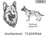 german shepherd breed... | Shutterstock .eps vector #711034966