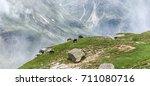 a herd of horses grazing in a... | Shutterstock . vector #711080716