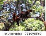 flocks of birds at the zoo   Shutterstock . vector #711095560