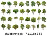 isolated tree on white... | Shutterstock . vector #711186958