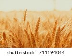 gold wheat field against the... | Shutterstock . vector #711194044