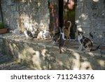 Greek Cats From Lefkada Island. ...