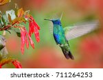 Hummingbird With Red Bloom...