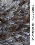 grey feathers of a greater rhea ... | Shutterstock . vector #711268888