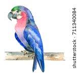 watercolor hand drawn parrot... | Shutterstock . vector #711340084