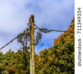 electrical pole with a monkey... | Shutterstock . vector #711349354