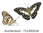close up of lime butterfly or... | Shutterstock . vector #711382018