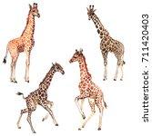 exotic giraffe wild animal in a ... | Shutterstock . vector #711420403