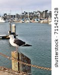 Seagull Perched On Wooden Post...