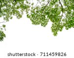 green tree with white background | Shutterstock . vector #711459826