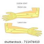 vector illustration of a human... | Shutterstock .eps vector #711476410