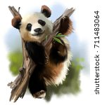 the giant panda on the tree... | Shutterstock . vector #711483064