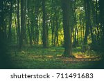 forest background.  | Shutterstock . vector #711491683