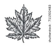Engraving Maple Leaf Isolated...