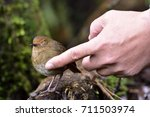 brown bird feeling love with... | Shutterstock . vector #711503974
