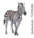 zebra isolated on white... | Shutterstock . vector #711556384