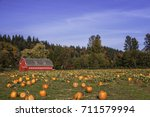 Pumpkin Field In Fall  1....