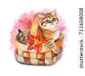 cute kitten in a basket.... | Shutterstock . vector #711608008