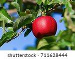 Red Apple  Macintosh  In Fall...