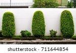 well groomed array of three... | Shutterstock . vector #711644854