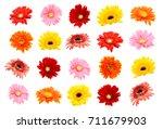 collection of gerbera flower... | Shutterstock . vector #711679903