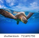 closeup portrait of aquatic... | Shutterstock . vector #711691750