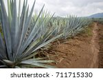 tequila  agave | Shutterstock . vector #711715330