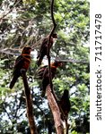 groups of birds on twigs   Shutterstock . vector #711717478