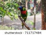 beautiful birds dancing on trees   Shutterstock . vector #711717484