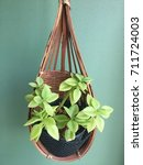 Mini Tree Pot Hanger On The...