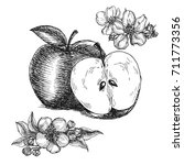 hand drawn apples and apple... | Shutterstock .eps vector #711773356