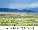 tibetan yak in pasture  tibetan ... | Shutterstock . vector #711786844