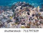 french grunt swimming swimming... | Shutterstock . vector #711797329