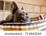 french bulldog dog relaxing  in ... | Shutterstock . vector #711842044