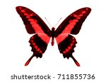Stock photo red butterfly isolated on white 711855736