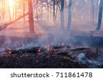 Forest Fire Burning  Wildfire...
