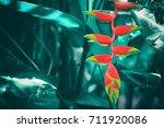 Tropical Vivid Color Flower...