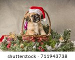 Stock photo cute tan puppy in a christmas scene with tinsel and hat 711943738