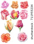 set watercolor pink roses and... | Shutterstock . vector #711955234