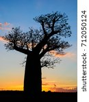 Small photo of one baobab tree, Adansonia za, on late evening in Berenty private reserve Madagascar