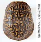 Shell Of Eastern Box Turtle...