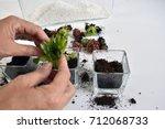Hands Planting Succulent Plants ...